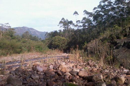 Sítio com 30.000 m² de plantação de eucalipto, área total de 55.500m²